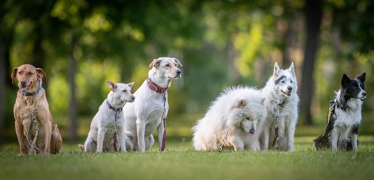 Dogschool Budapest